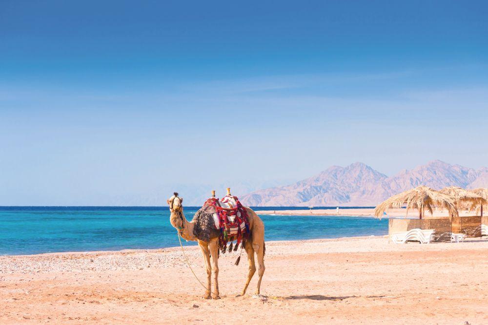 رحلة سفاري بالجمال في شرم الشيخ