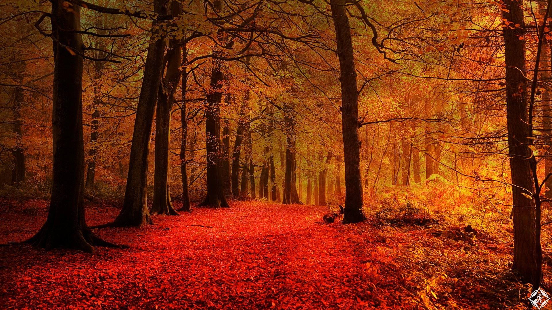 رحلة غابة بلغراد تركيا